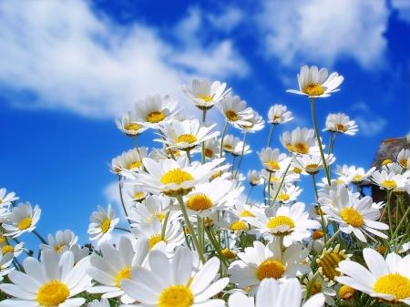 flowers_128-800x600
