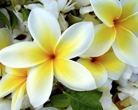 flowers_88-1280x1024